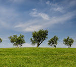 Importance of trees poem, slogan in hindi