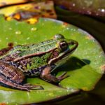 The frog in the well story