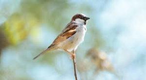 Sparrow essay in hindi language