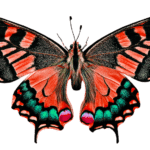 Essay on butterfly in hindi language