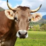 Essay on cow in hindi