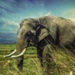 Essay on elephant in hindi
