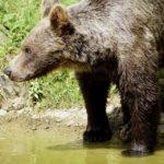 Bear Essay and poem in hindi