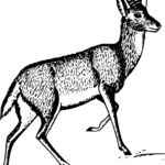Essay on deer in hindi language