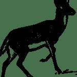 Essay on deer in hindi language