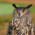Essay on owl in hindi