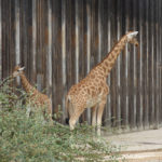 Essay on visit to a zoo in hindi