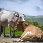 Essay on pet animal in hindi