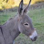 poem on donkey in hindi