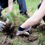 tree plantation quotes in hindi