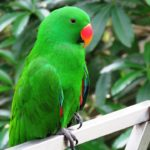 Poem on parrot in hindi