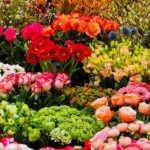 my favourite season spring essay, poem, quotes in hindi