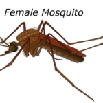 Essay on malaria in hindi