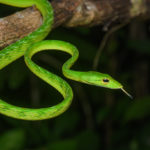 Essay on snake in hindi language