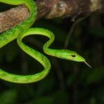 Essay on snake in hindi language