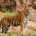 save tiger quotes, slogan in hindi