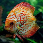 essay on fish in hindi