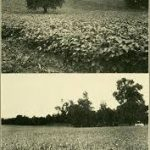 Essay on crops in hindi