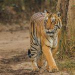 Essay on jim corbett national park in hindi