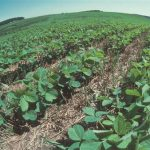 Essay on organic farming in hindi