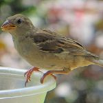 World Sparrow Day essay in hindi