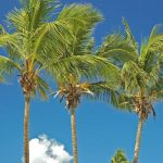 Coconut tree autobiography in hindi