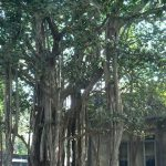 Essay on banyan tree in hindi